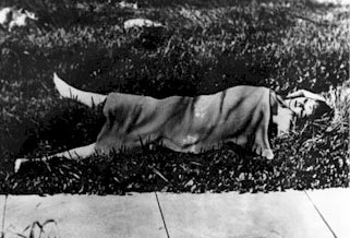 Elizabeth Short's body